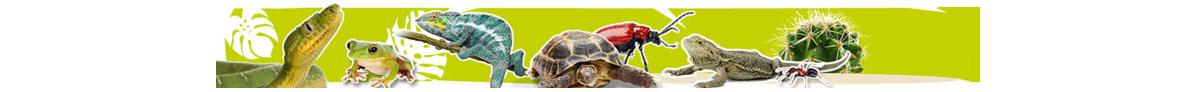 Maintier-Header-Reptilien